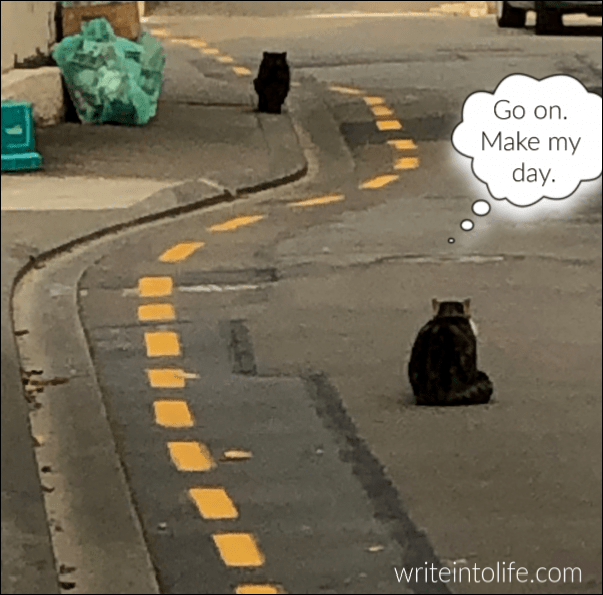 two cats sit on a road playing chicken. One thinks, Go on. Make my day.