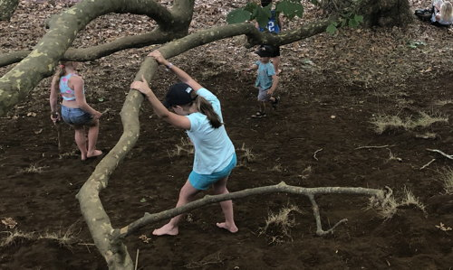 children playing in a tree at WOMAD 2018