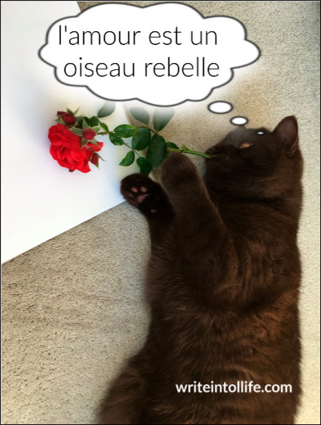 cat with a rose in its mouth thinking L'amour est un oiseau rebelle