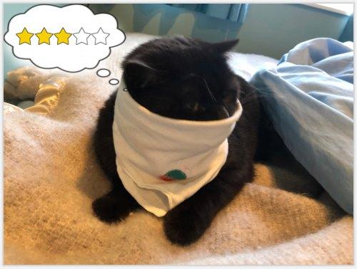 cat wearing cotton hanky around face, thinking three stars