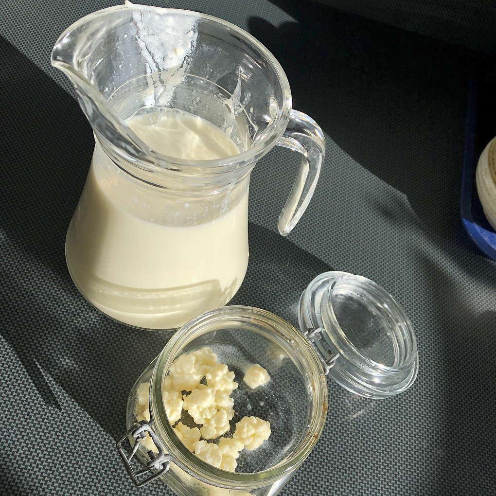 photo of milk kefir and kefir grains in jars