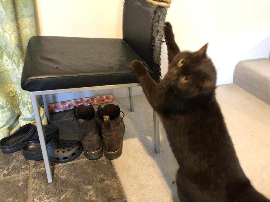 Photo of cat clawing a chair under which stand a large pair of brown boots