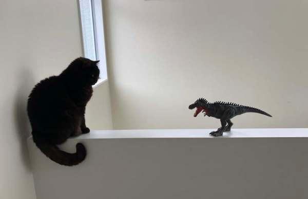 Cat ignoring toy dinosaur