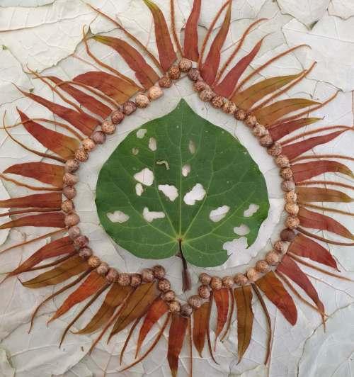 Painting with plants: kawakawa leaf with caterpillar