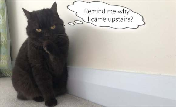 """Photo of cat apparently thinking Remind me why I came upstairs?"""""""