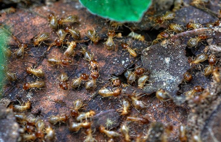 termite inspection Brisbane