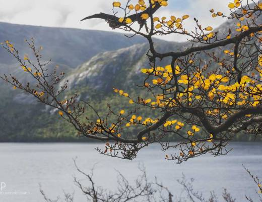 flora, dove lake, cradle mountain, tasmania