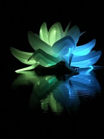 Nightfest Lotus Flower 5