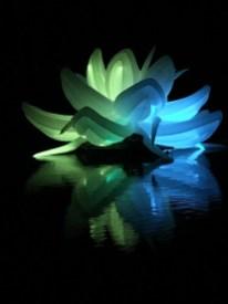 Nightfest Lotus Flower 5