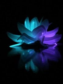 Nightfest Lotus Flower 6