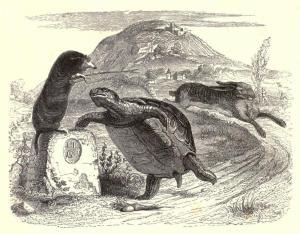 Grandville 1855 Illustration