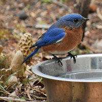 Did the bluebird see his shadow?