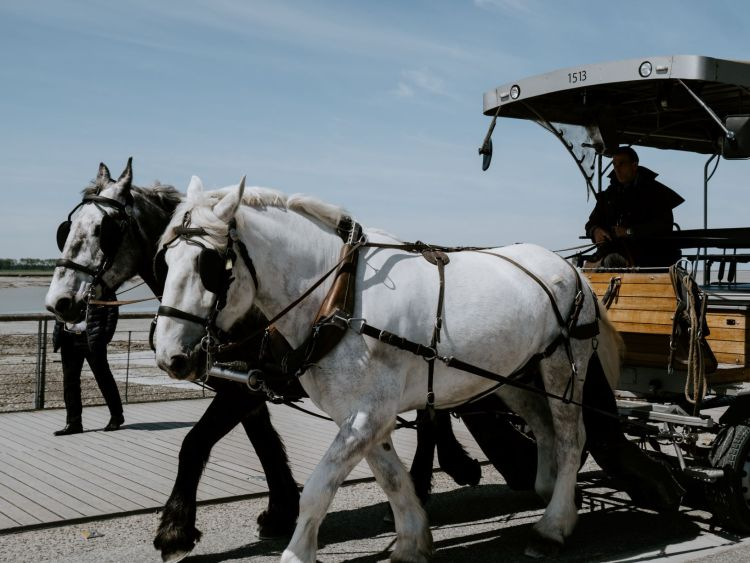 2 horses and a driver in a cart