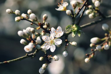 spring creative writing