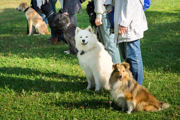 bigstock-A-Group-Of-Dogs-Sitting-Near-T-104041238_It's Not You.jpg