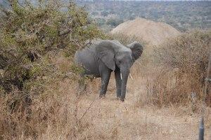 Africa 170