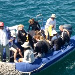 Panga Ride: Returning from Deep Sea Snorkeling
