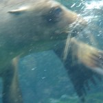 Snorkel buddy