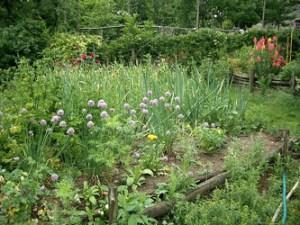 Garden Photo_photopin