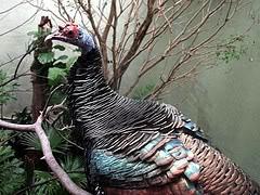Happy Turkey