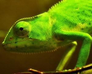 photo by Flickr's She Chameleon