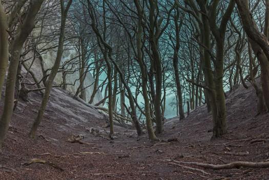 640px-Møns_Klint_beech_trees_in_gorge_2015-04-01-4864