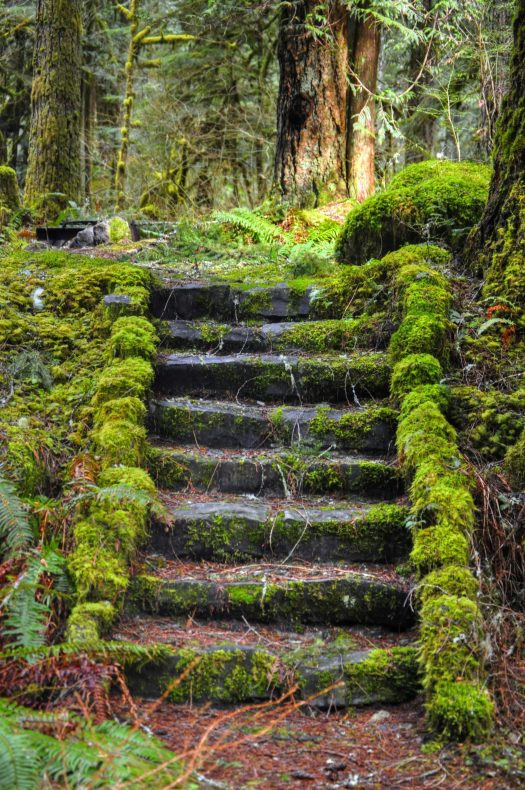 mossy-stairs