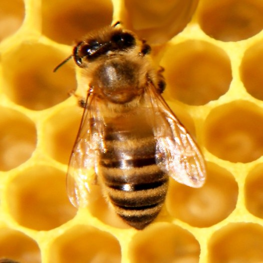 Bee Still My Writing — Why and How I'm Taking Time Off
