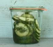 quick refrigerator pickles | writes4food.com