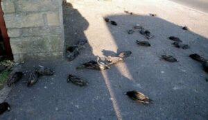 Rome: New Year's Eve fireworks led Massacre of birds!