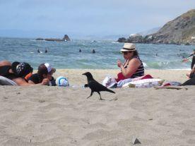 Crow & sunbathers