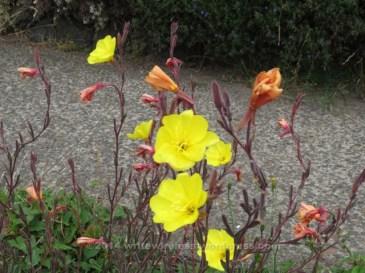 Street Flowers 2