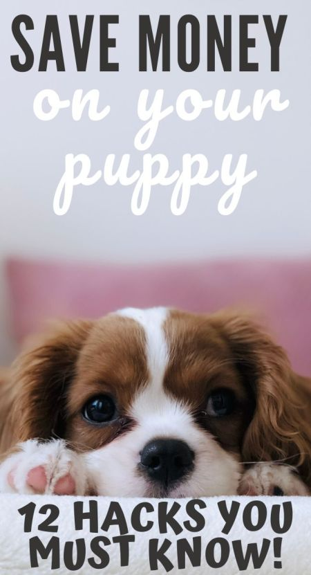 save money on your puppy / save money on your dog