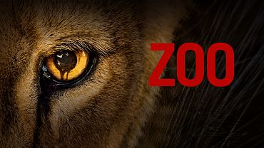 Zoo Tv series poster