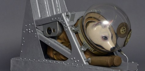 space-dog-model-800x392