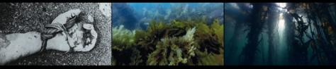 John Akomfrah Vertigo Sea