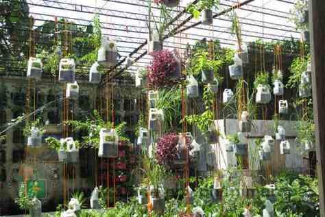vertical organic garden