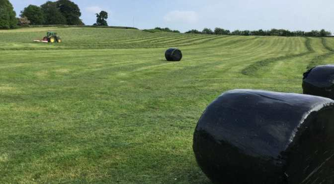 How Those Big Black Bales in Fields are Made, and Baby Animals