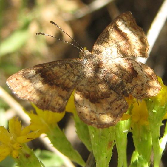 Butterfly in dappled light