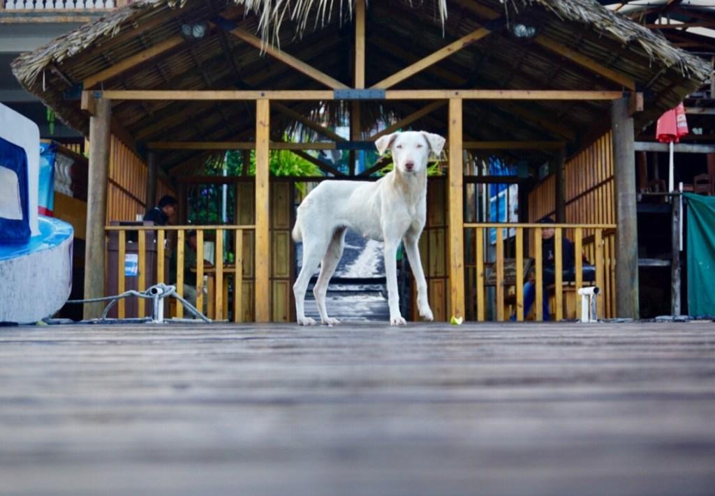 Dog standing on boat dock