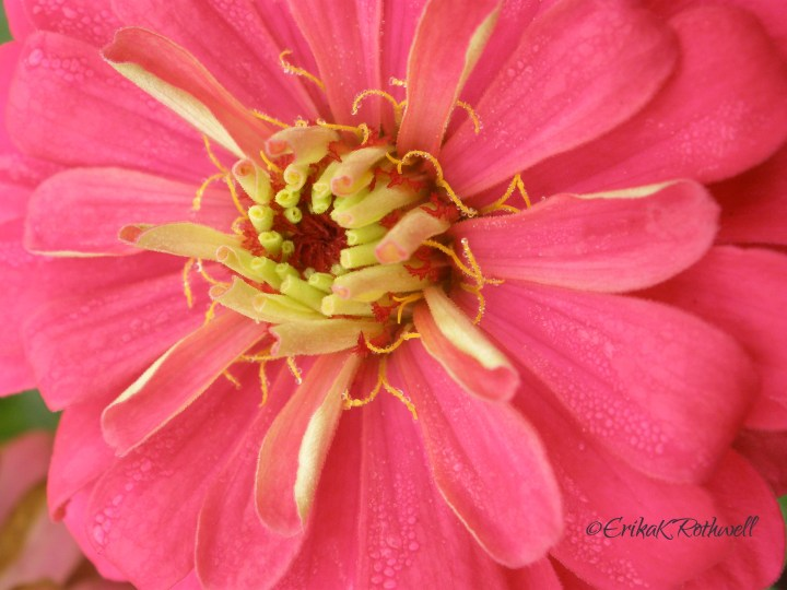 Fake Flowers – Search for Petals of Authenticity