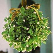 Decorative mistletoe