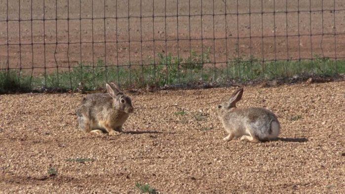 When is a Rabbit Not a Good Rabbit?