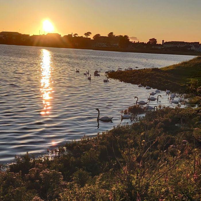 Swans of Lough Atalia