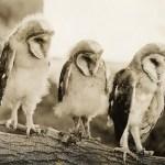 birdbybird5
