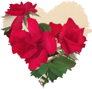 Mabsud roses for hodan