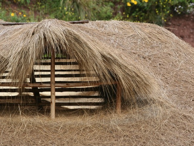 Thatched roof detail, Sacred Valley, Peru