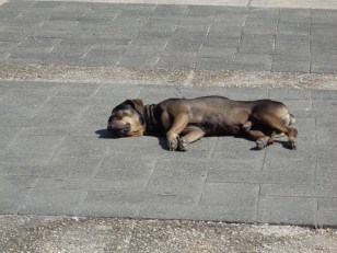 Hot Dog, Santo Domingo