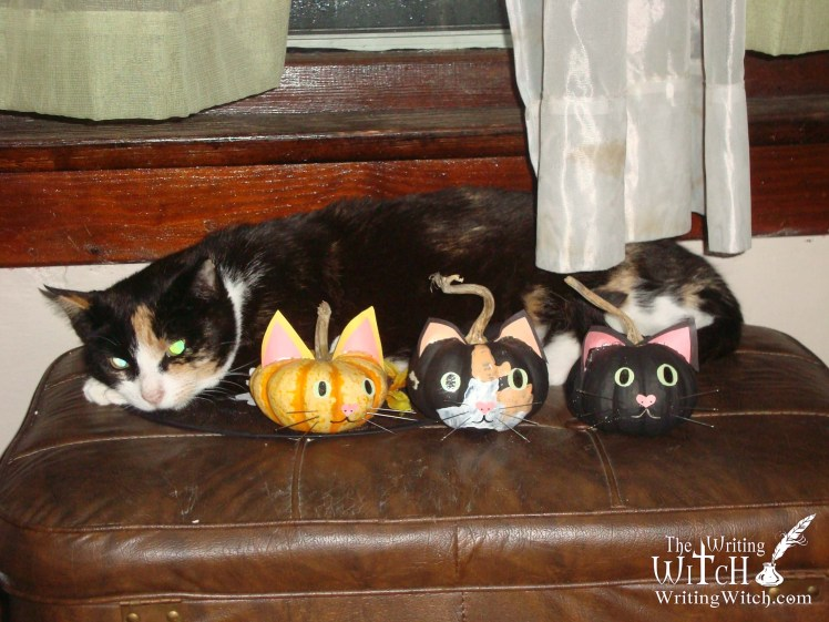 cat with pumpkins decorated to look like cats