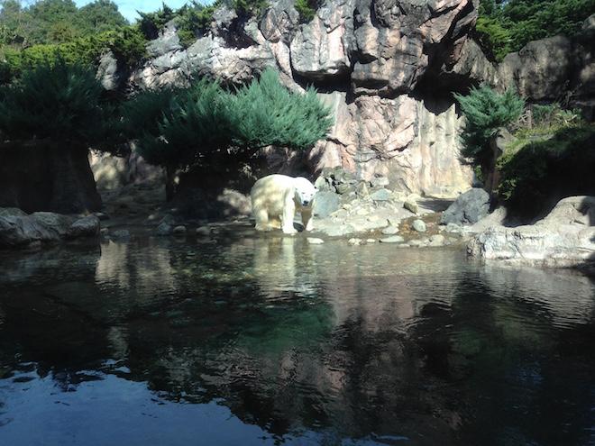 zoorasia-yokohama-zoological-gardens17